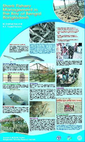 Shark fisheries management